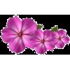 kwiaty - Rastline -