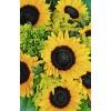 kwiaty - Plants -