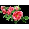 kwiaty - Plantas -