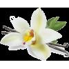 kwiaty - Biljke -