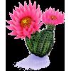 kaktus - Biljke -