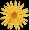 Sun - Plants -