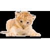Lavić - Animals -