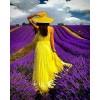 lavanda - My photos -