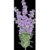 lavender - Rośliny -