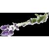 lavender - Plants -