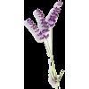 lavender stem - Plants -