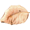 leaf - My photos -
