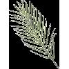 leaf - Rastline -