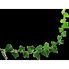 leaf-ivy - Uncategorized -
