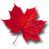 leaf red - Uncategorized -