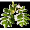 leafy stems - Plants -