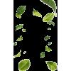 leaves - Illustrations -