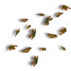 leaves - Items -
