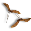 leaves - Predmeti -