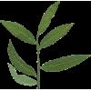 leaves - Ilustracje -