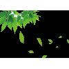 leaves - Plantas -