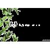 leaves - Растения -