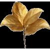 leaves - Plants -