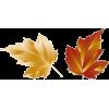 leaves - Rastline -