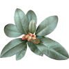 leaves flower - Plantas -
