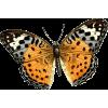 leptir - Zwierzęta -