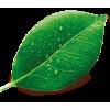 liść - Natural -