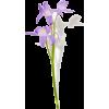 light purple lily flower stem - 植物 -