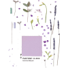 lilac Background - Background -