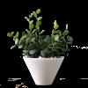 Little Plant 2 - Rośliny -
