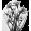 x-ray - Biljke -