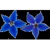 blue flower - Biljke -