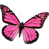 pink butterfly - Animals -