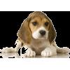 Dog - 動物 -
