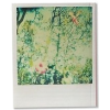 Polaroid Pictures  - Items -