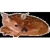 Baby Deer - 动物 -