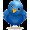 Bird - Illustrations -
