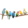 Birds - Animais -