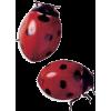Ladybird - 动物 -