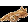 Cat - Tiere -