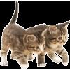 Cats - Životinje -