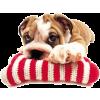 Dog - Zwierzęta -