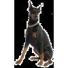 Dog - 动物 -
