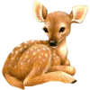 Fawn - Animales -