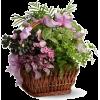 Flowers - Plants -