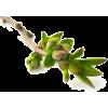 Branch - Plants -