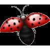 Ladybird - イラスト -