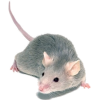 Mouse - Animals -