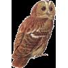 Owl - Animals -