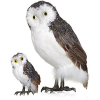 Owls - Animals -